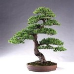 Useful Techniques on How to ship Bonsai trees