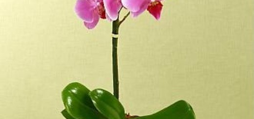 how to ship orchids