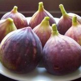 Ship Fresh Figs